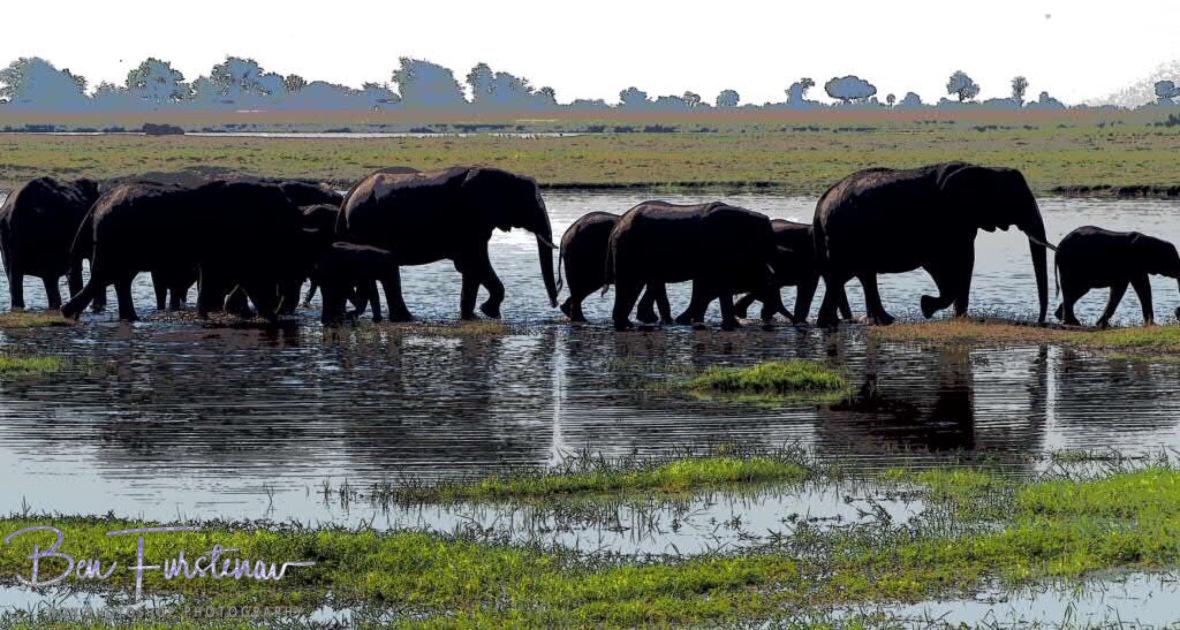 Elephant parade, Chobe National Park, Botswana