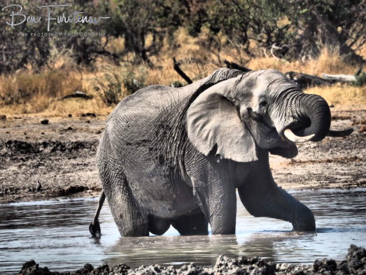 Private, Moremi National Park, Botswana