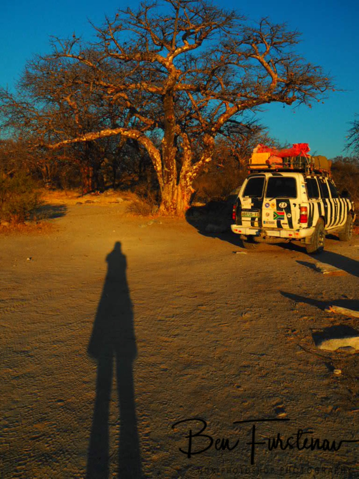 Long shadows, Kubu Island, Makgadikgadi Salt Pans, Botswana
