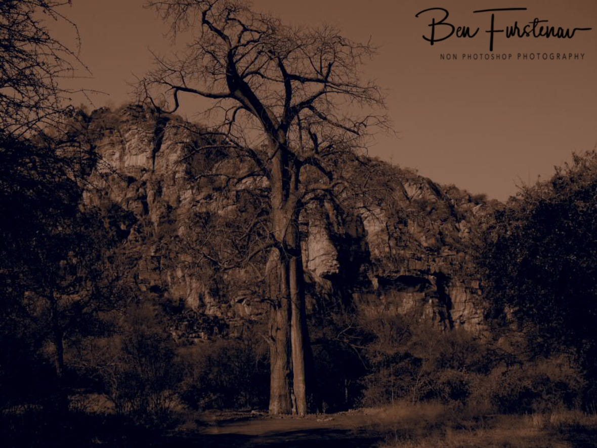 Ancient Baobab on mystic grounds, Tsolido Hills, Kalahari desert, Botswana