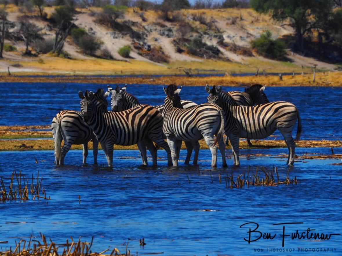 Smaller herd, Makgadikgadi National Park, Botswana