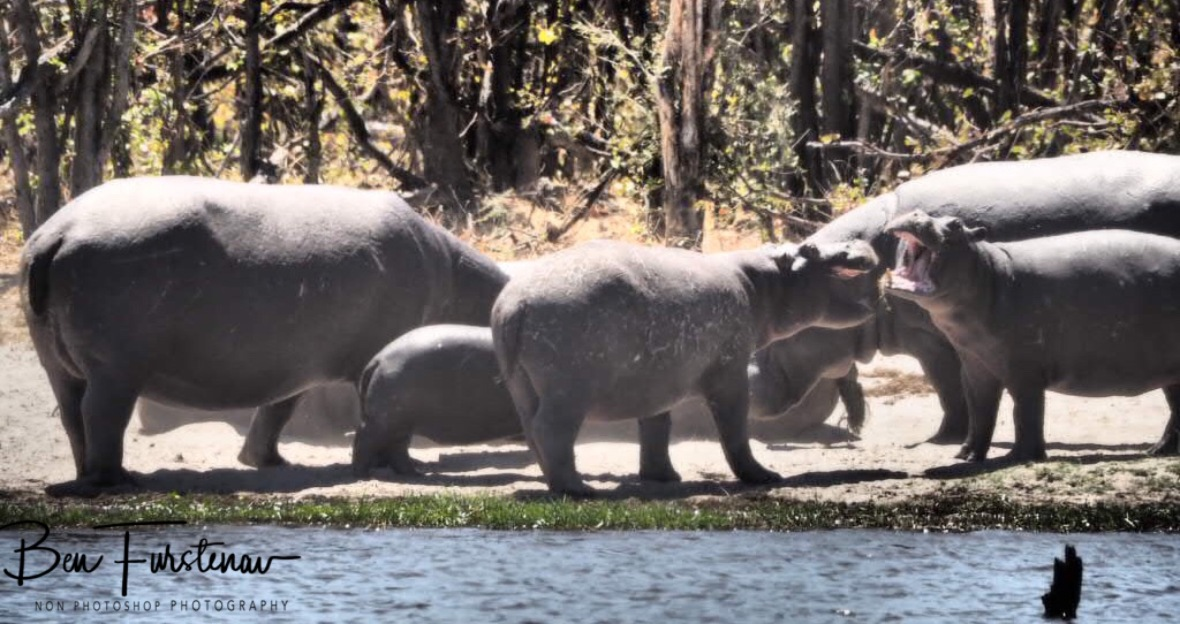 Family discussion, Savuti, Chobe National Park, Botswana