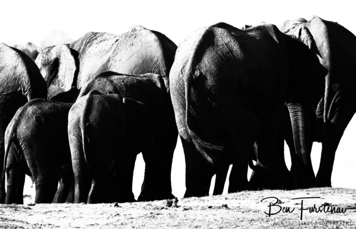 Back up, Chobe National Park, Botswana