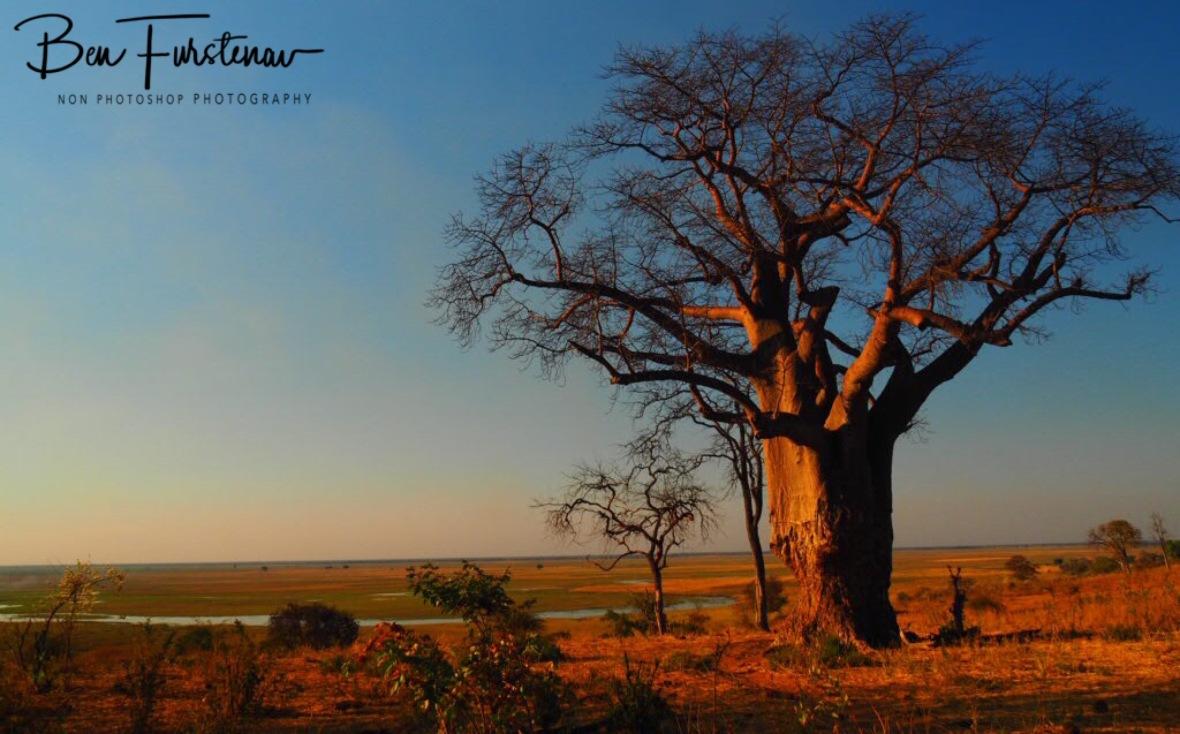Overlooking the Chobe Plains, Okavango Delta, Botswana