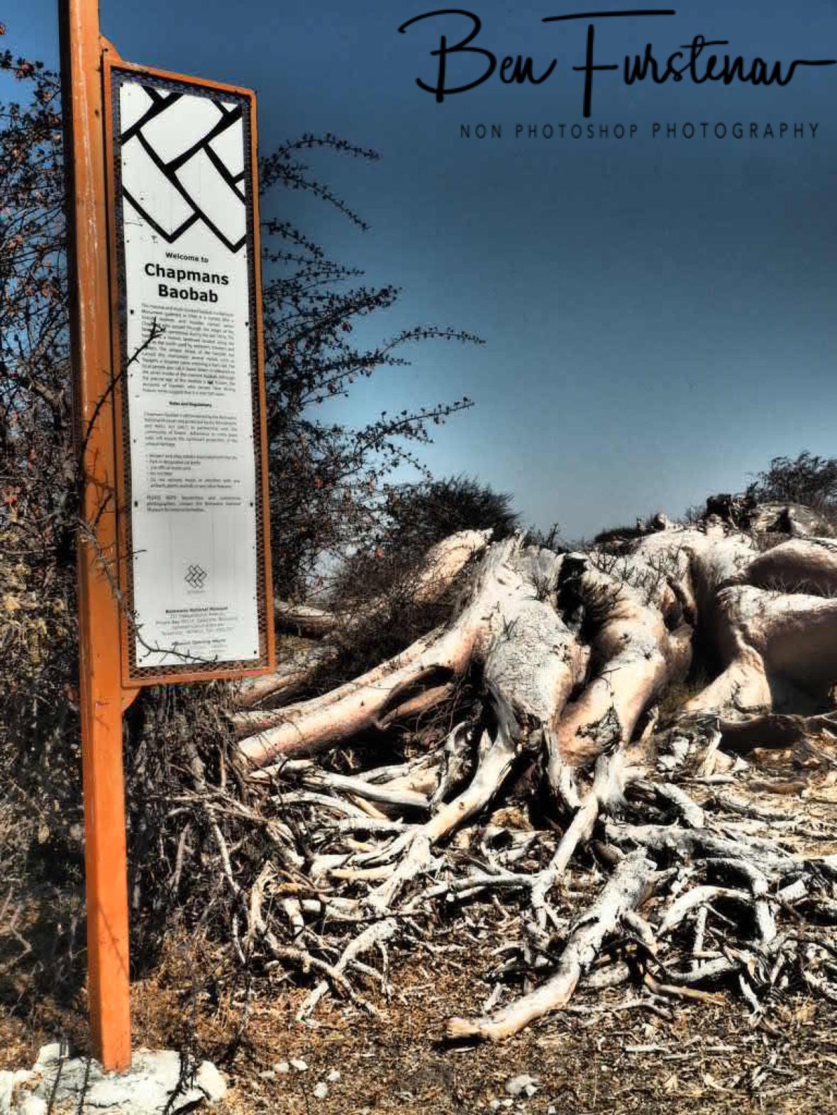 Chapman's Baobabs site, Makgadikgadi Salt Pans, Botswana