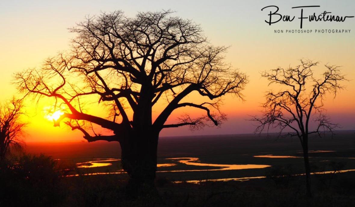 Baobab sunset, Okavango Delta, Botswana