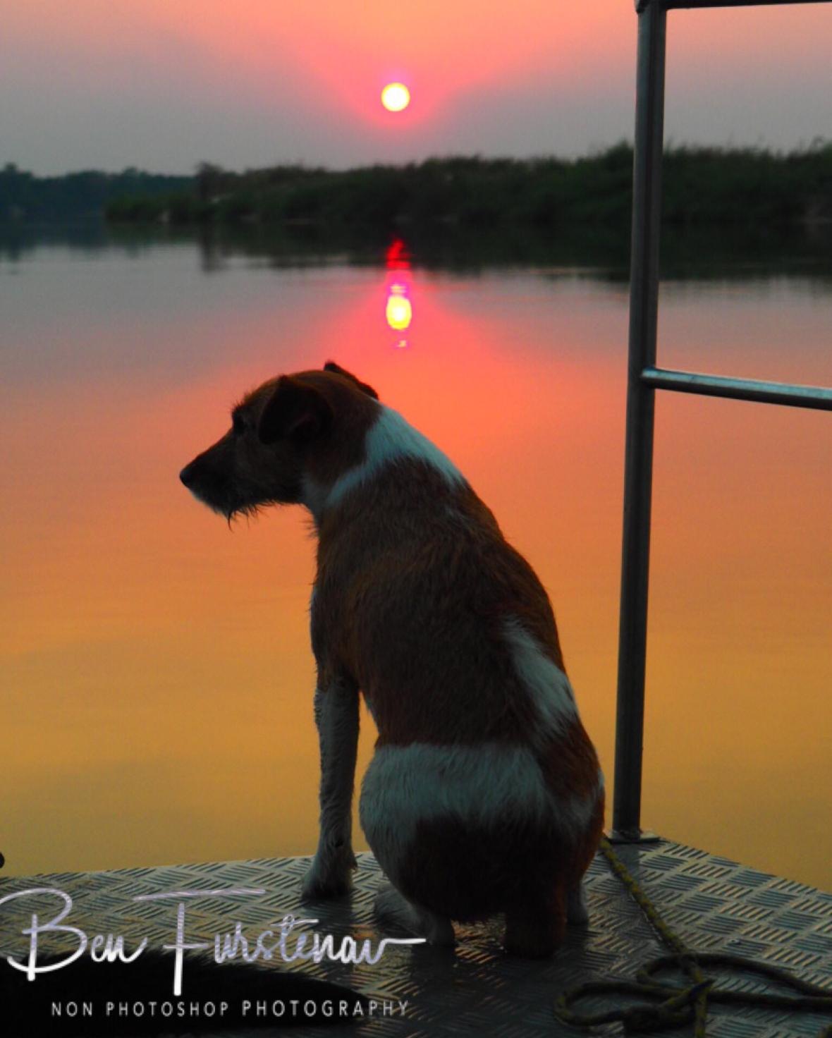 Max on the sunset, Katima Mulilo, Namibia