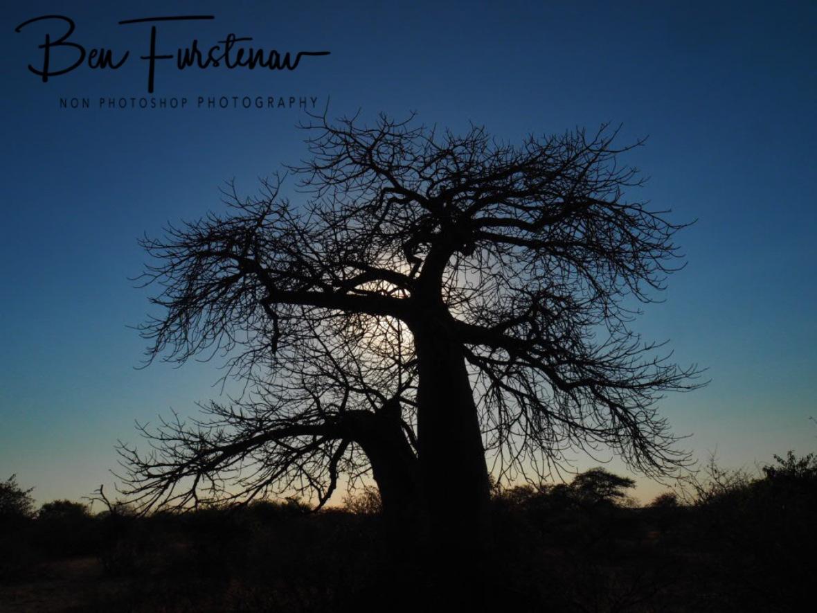 Higher rising sun, Kubu Island, Makgadikgadi Salt Pans, Botswana