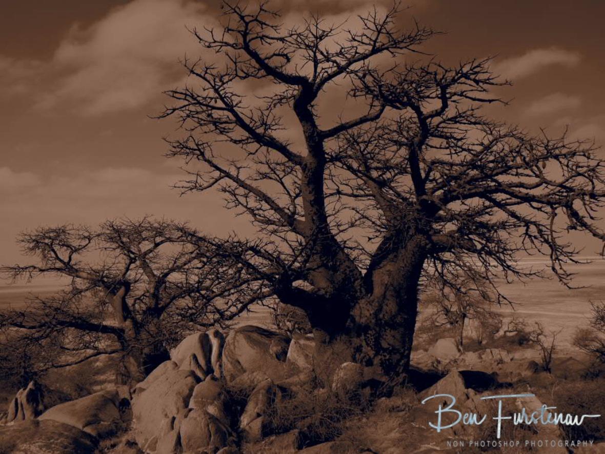 Fascinating Baobab Island to come, Kubu Island, Makgadikgadi Salt Pans, Botswana