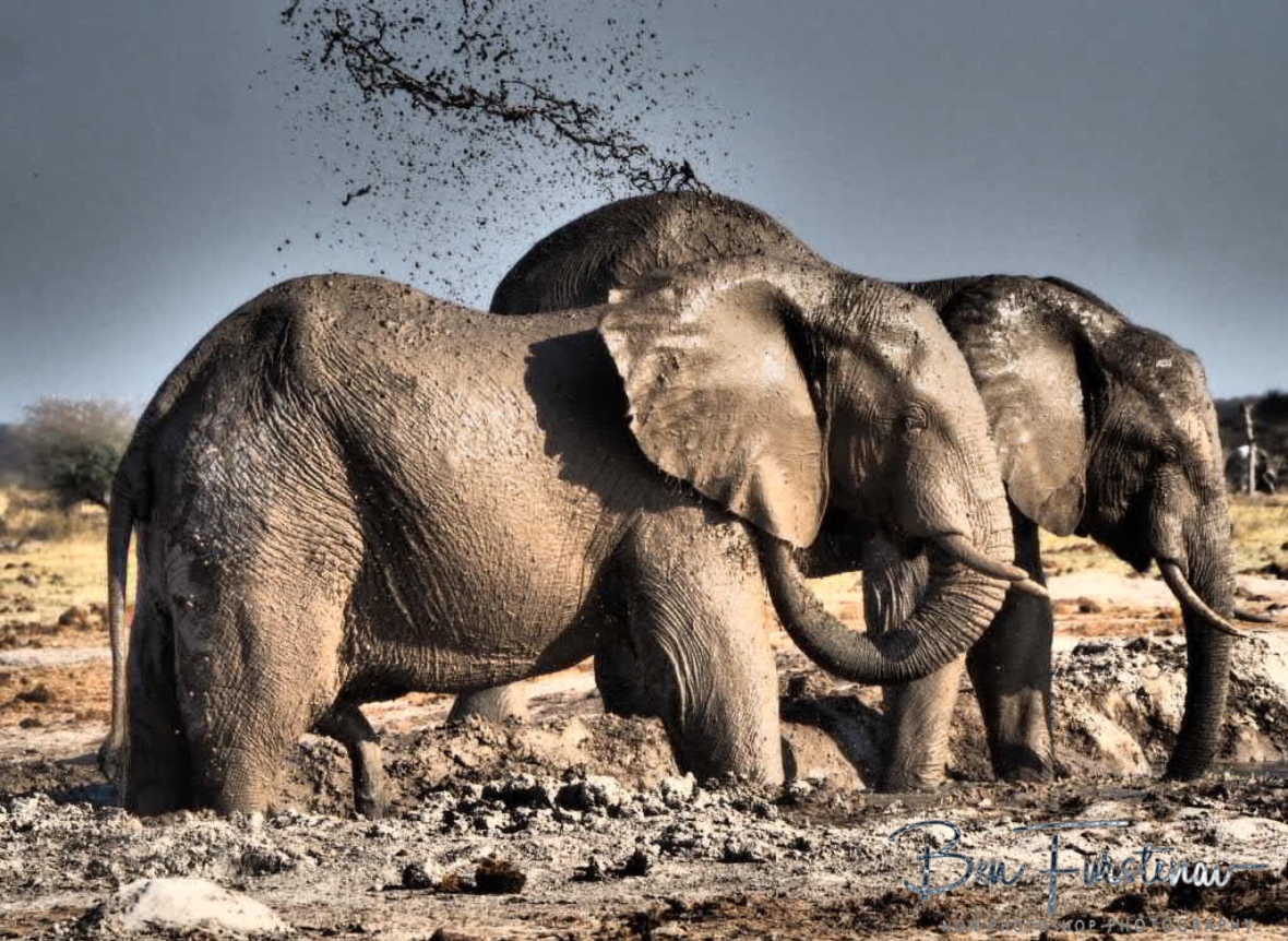 Muddy spray, Nxai National Park, Botswana