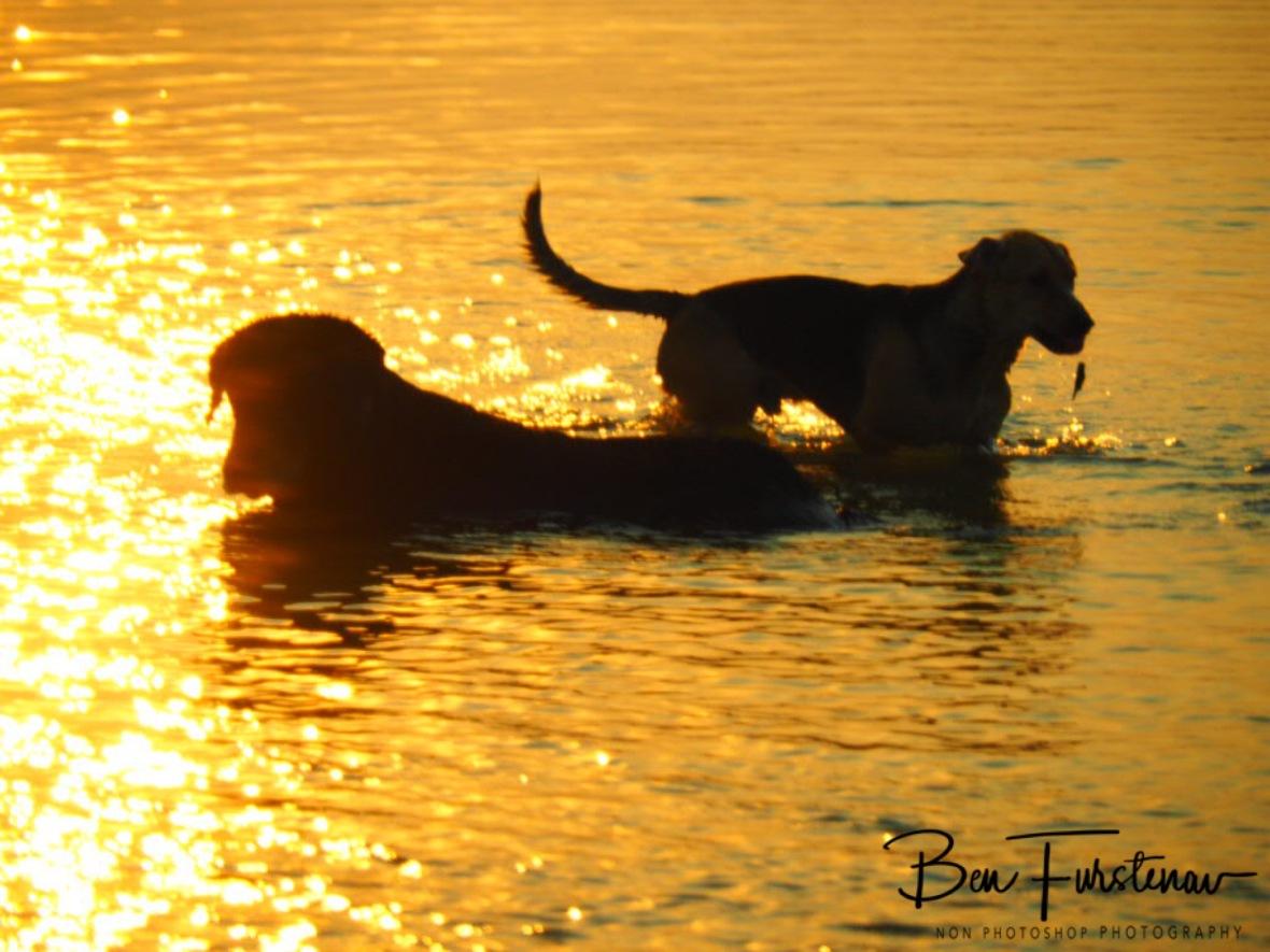 Dogs life, Katima Mulilo, Namibia