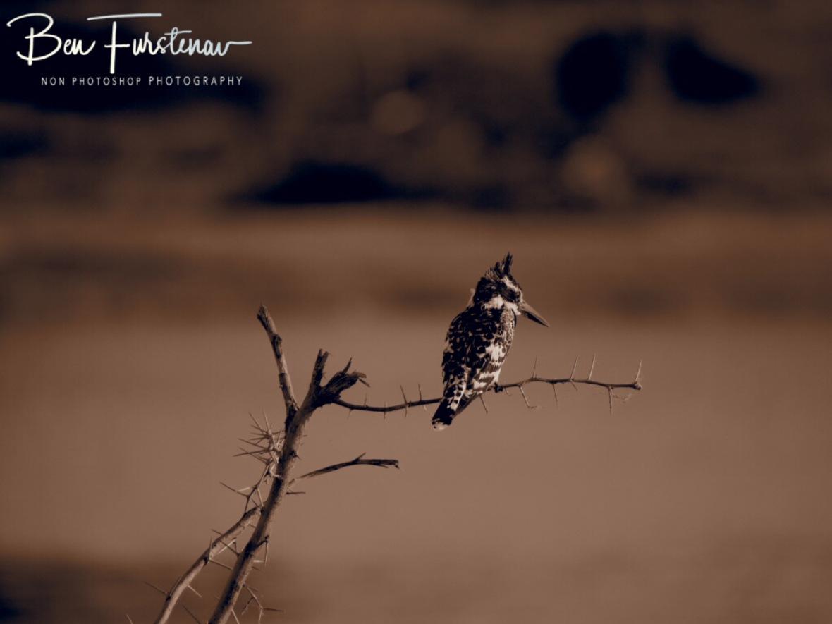 Kingfishing, Makgadikgadi National Park, Botswana