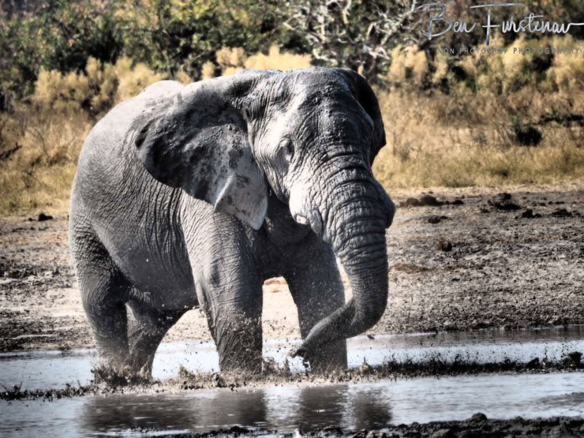 Toothache, Moremi National Park, Botswana