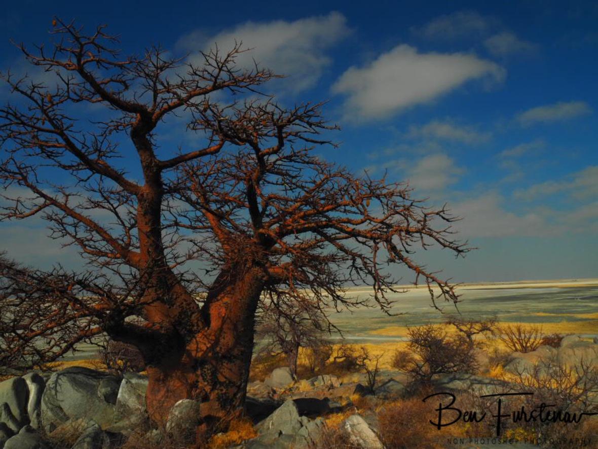 Endless view to the east, Kubu Island, Makgadikgadi Salt Pans, Botswana