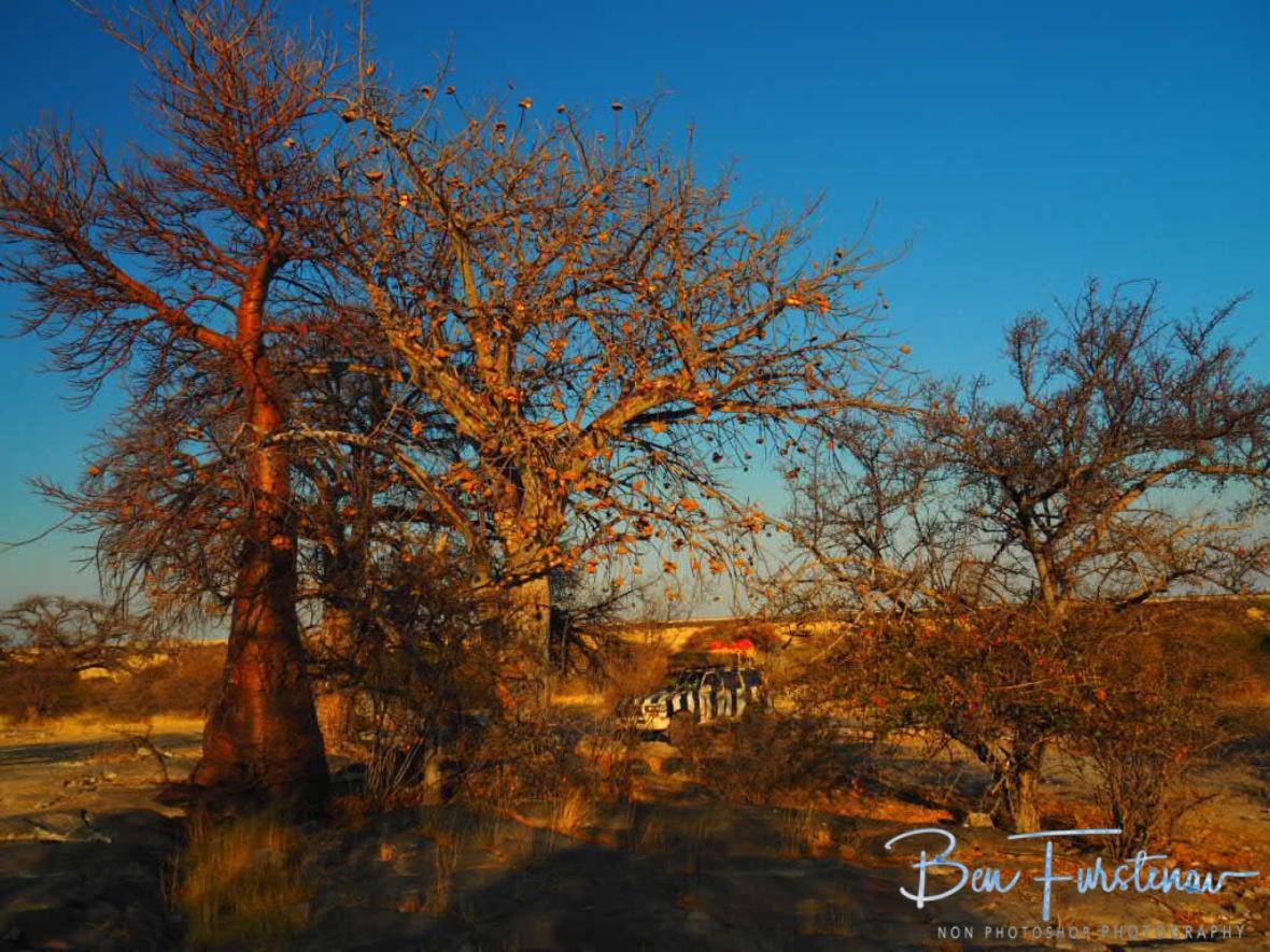 Campingsite on Kubu Island, Makgadikgadi Salt Pans, Botswana