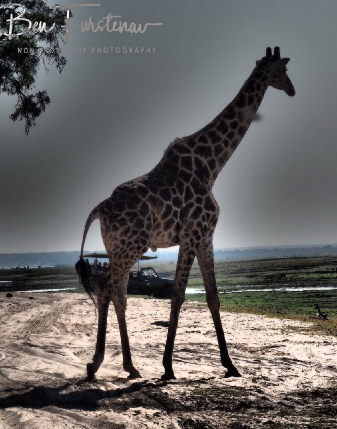 Hard task to shoot photos without vehicles, Chobe National Park, Botswana