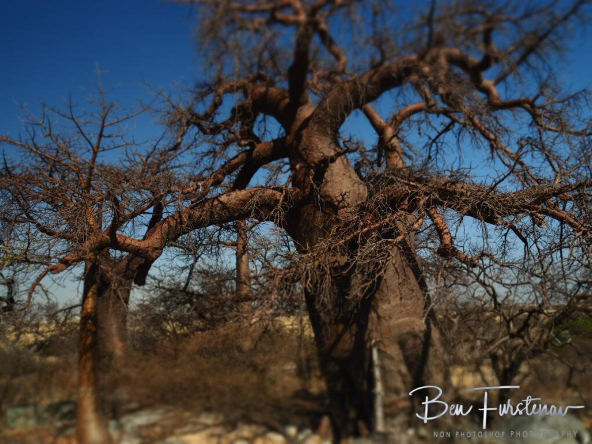 Exit from the museum is that way!, Kubu Island, Makgadikgadi Salt Pans, Botswana