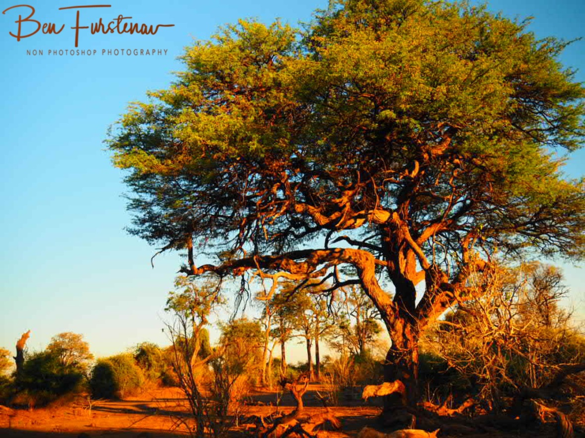 Fantasy land, Chobe National Park, Botswana