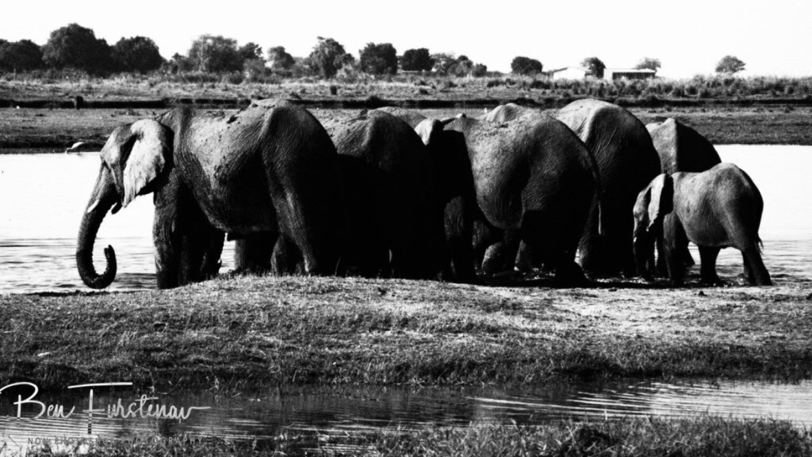 Elephant back parade, Chobe National Park, Botswana