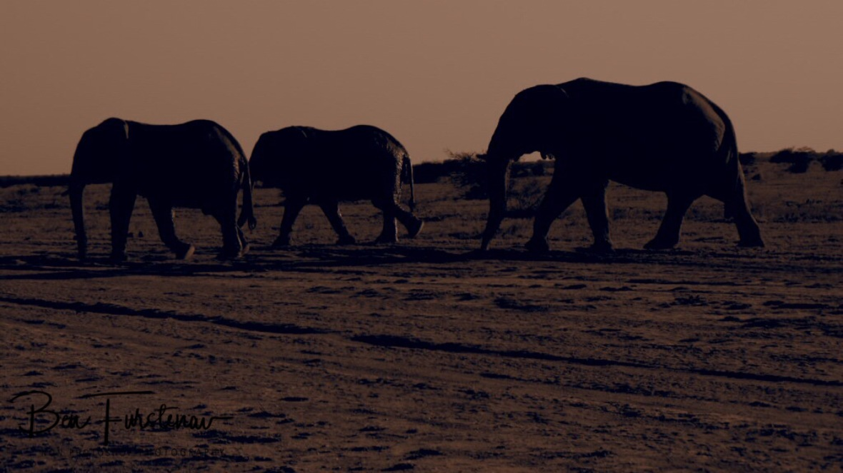 Elephant crossing in sepia, Nxai National Park, Botswana