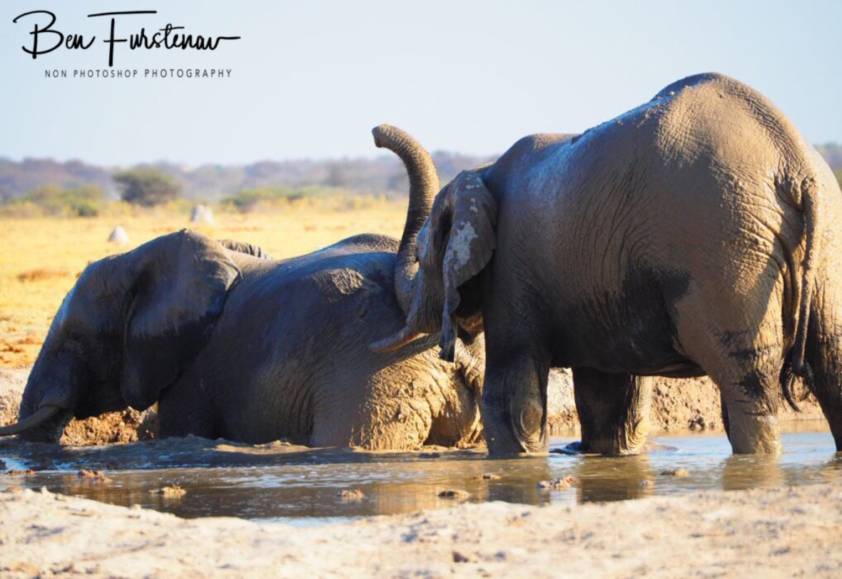 Unwanted help, Nxai National Park, Botswana