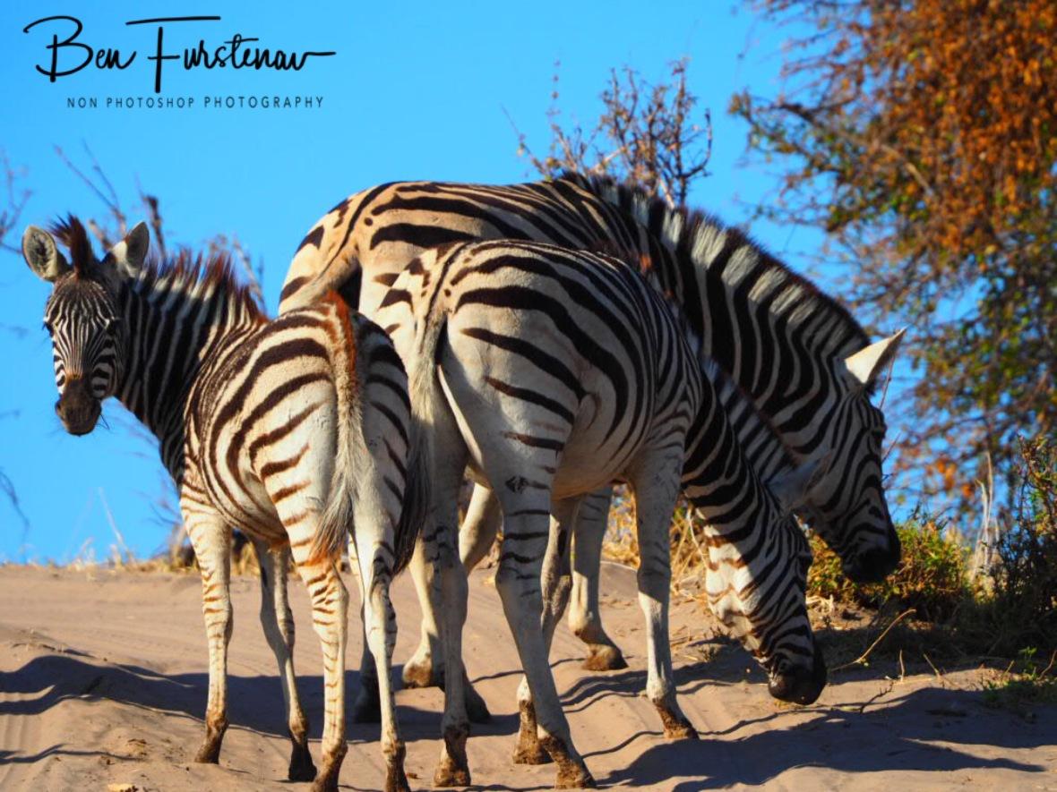 Confused looks, Makgadikgadi National Park, Botswana