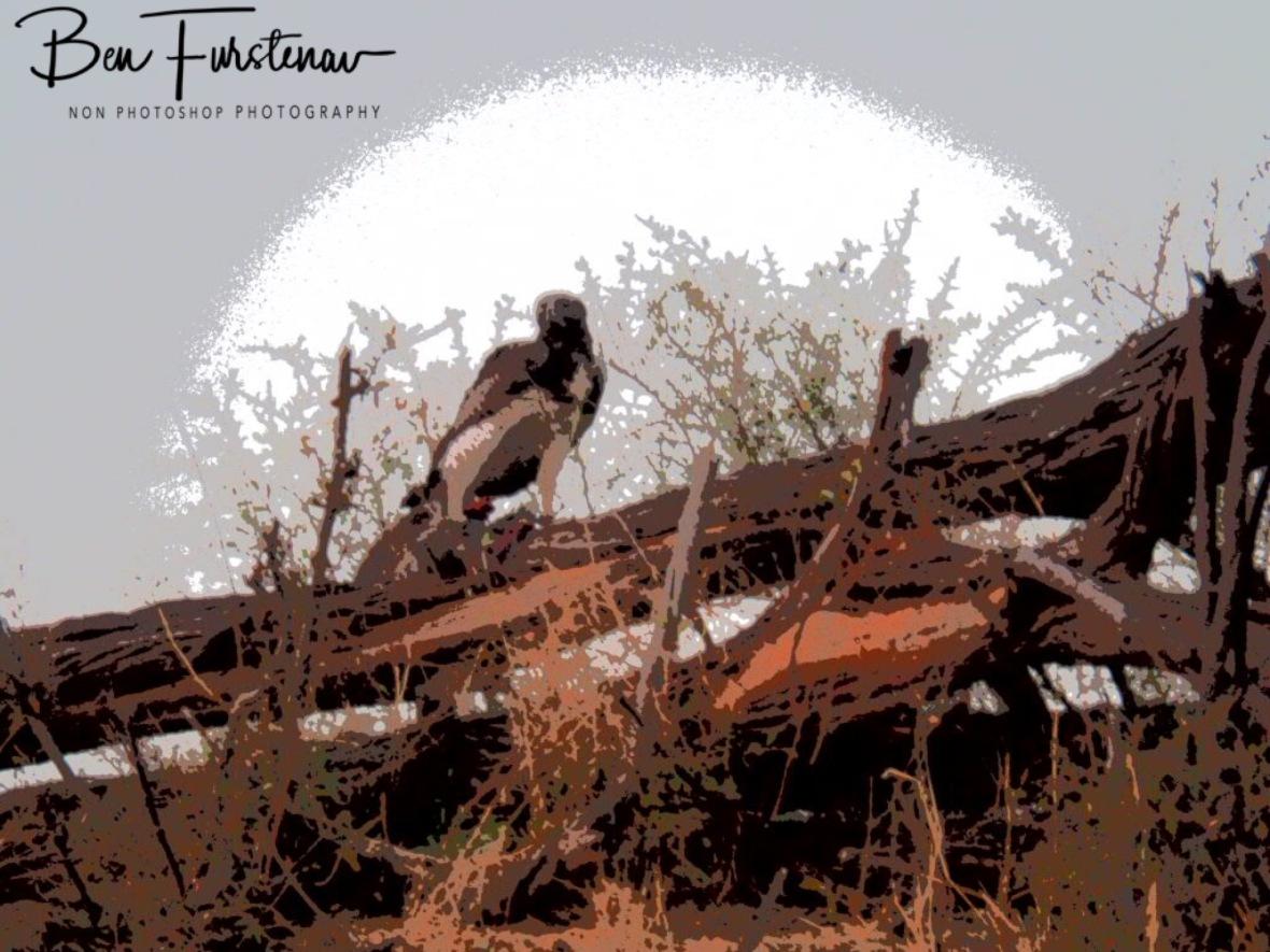 Prey overload, Makgadikgadi National Park, Botswana