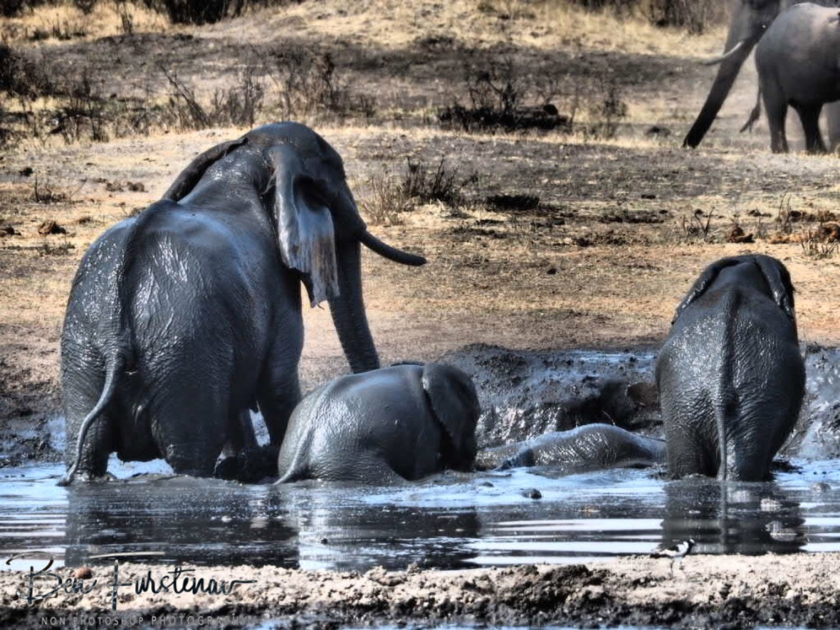 Too much fun for elephants and for me to watch, Khaudum National Park, Namibia