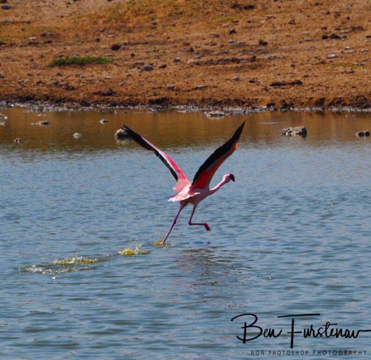 Keep the Runway Free, Makgadikgadi Salt Pans, Botswana