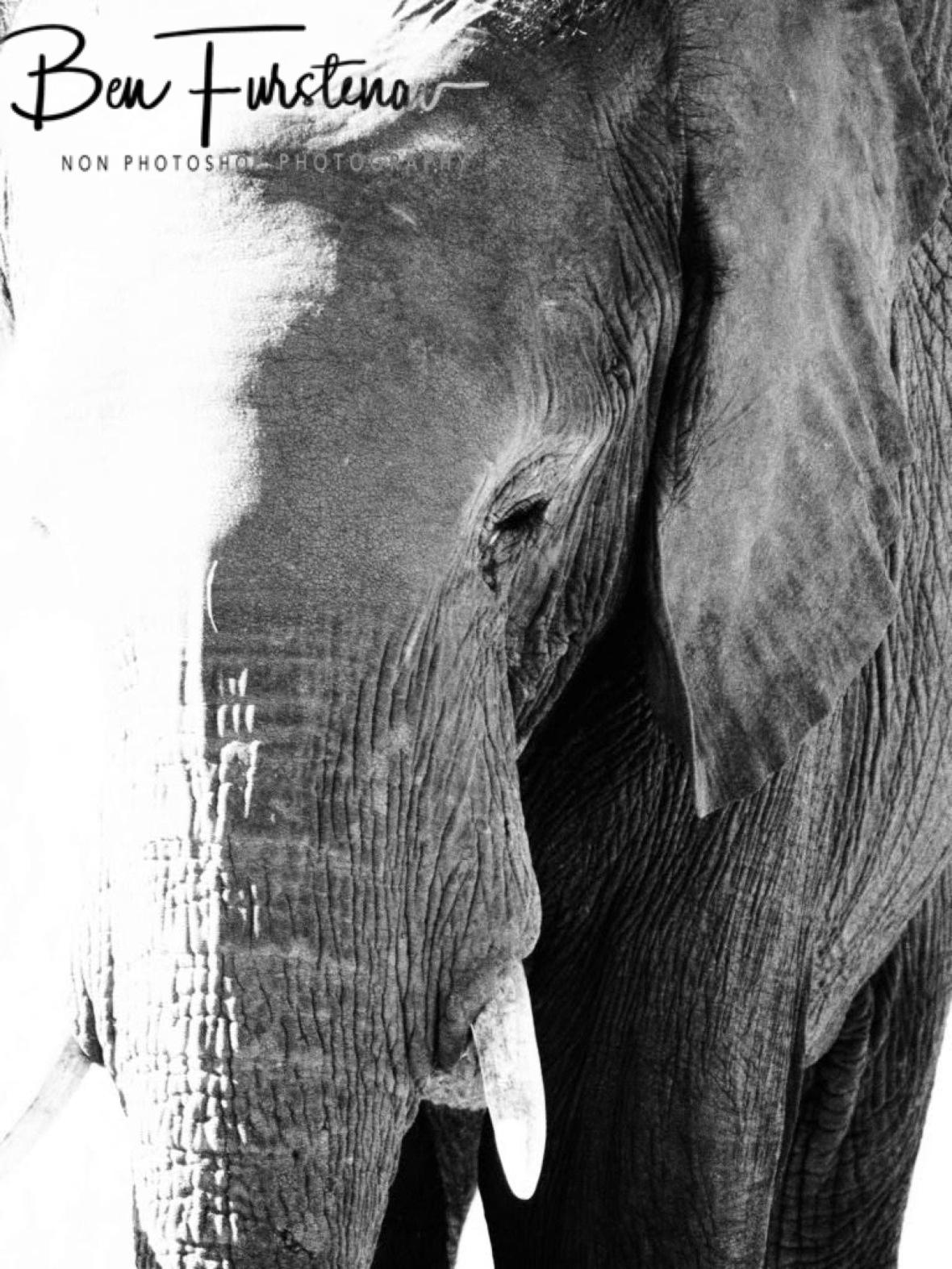 From black to white, Chobe National Park, Botswana