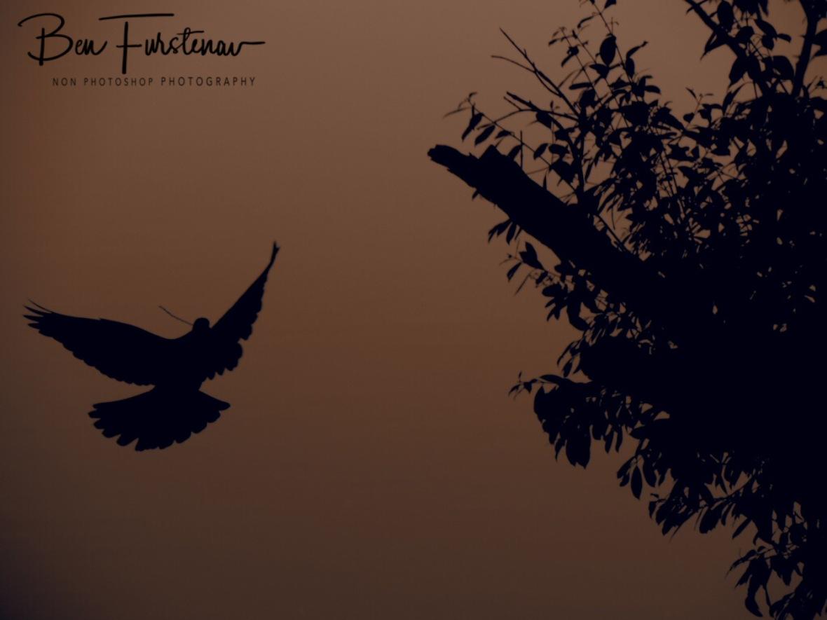 Pidgeon off Peace?, Katima Mulilo