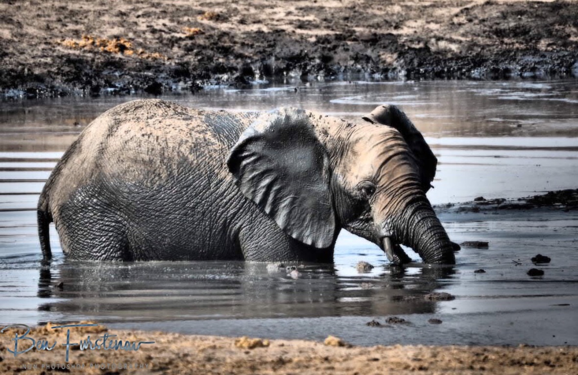 Mud bath explorer, Khaudum National Park, Namibia