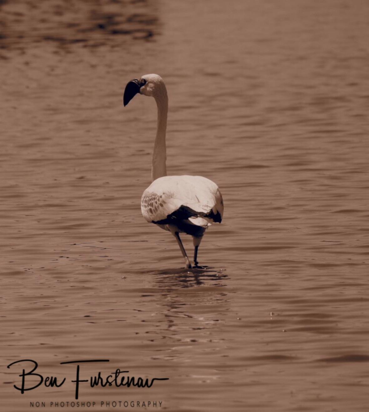 OM-D, a flamingo, Makgadikgadi Salt Pans, Botswana
