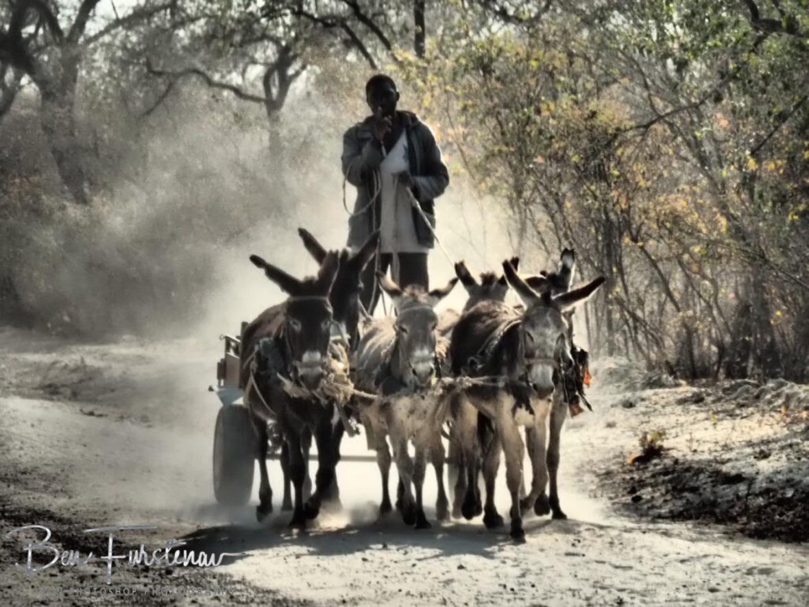 Donkey carriage, Tsolido Hills, Botswana