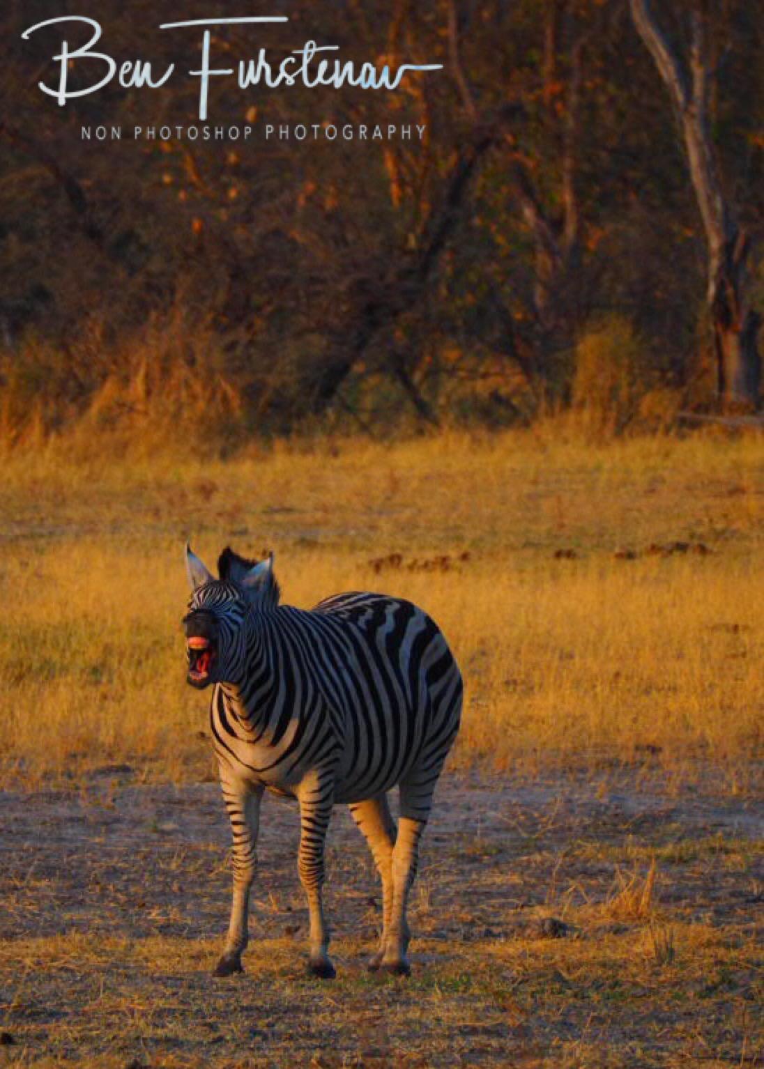 Loudmouth, Makgadikgadi National Park, Botswana