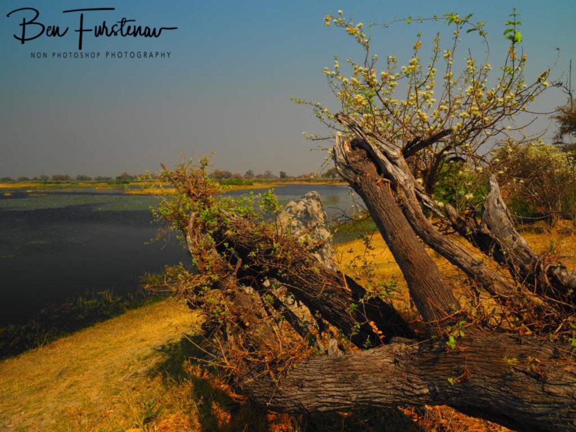 Lifeless scenes, Mudumu National Park, Namibia
