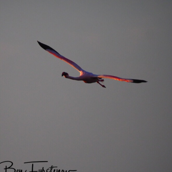 Graceful in the air, Makgadikgadi Salt Pans, Botswana