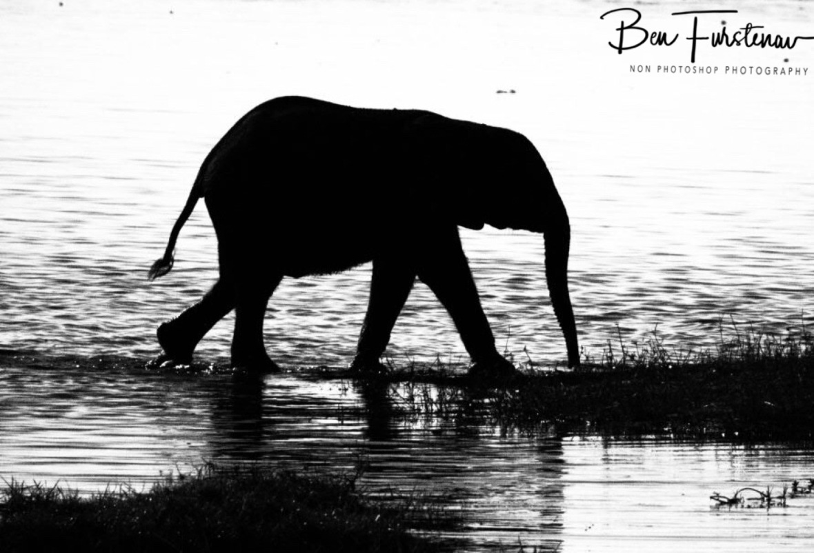 Wee one follows, Chobe National Park, Botswana