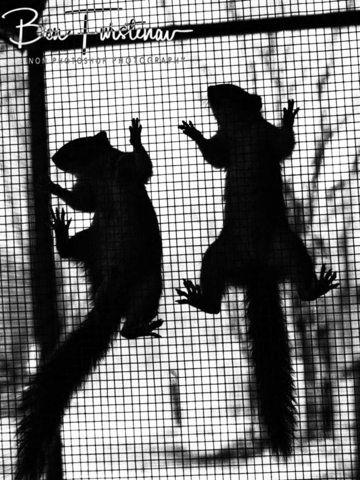 Squirrel shadows, CARACAL Wildlife centre, Kasane, Botswana