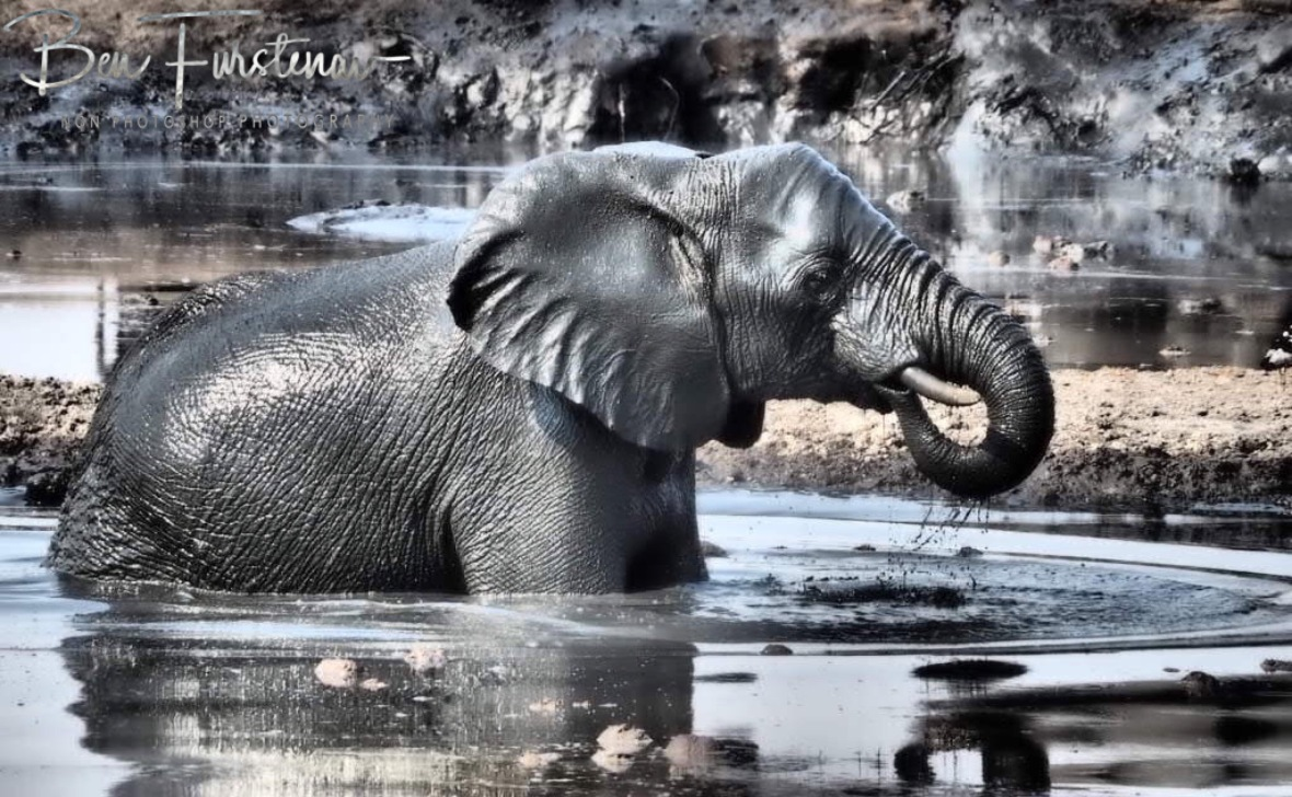 A drink of water in between play, Khaudum National Park, Namibia