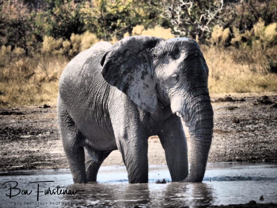 Lovesick?, Moremi National Park, Botswana