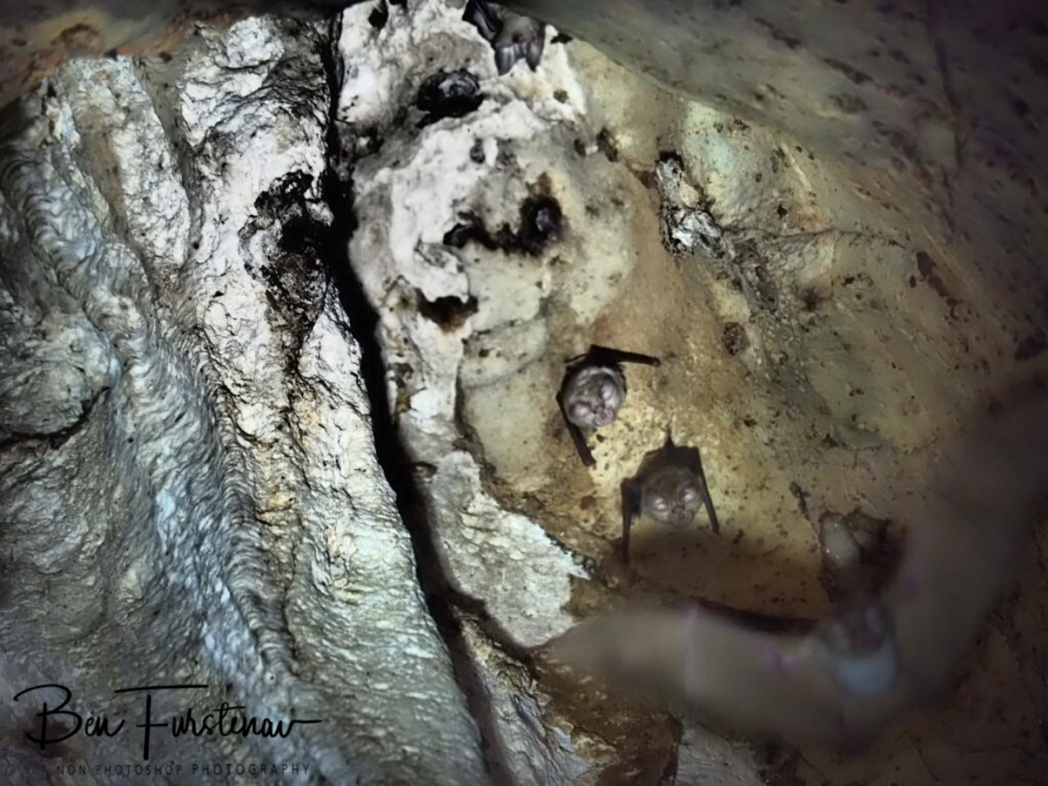 Thousands  of bats, Drotsky Caves, Kalahari desert, Botswana