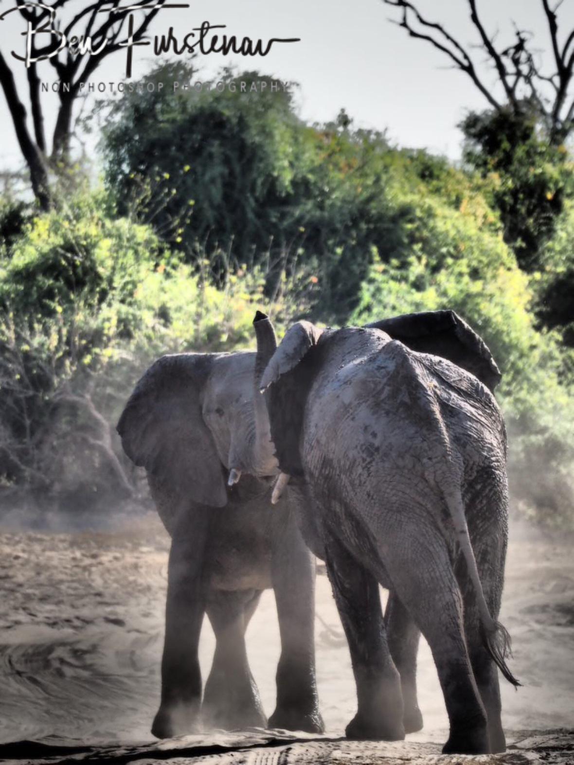 Elephant tussle, Chobe National Park, Botswana