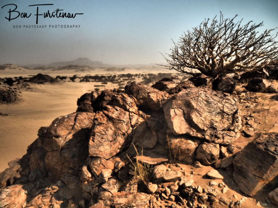 Plants grow where they can, Damaraland, Namibia