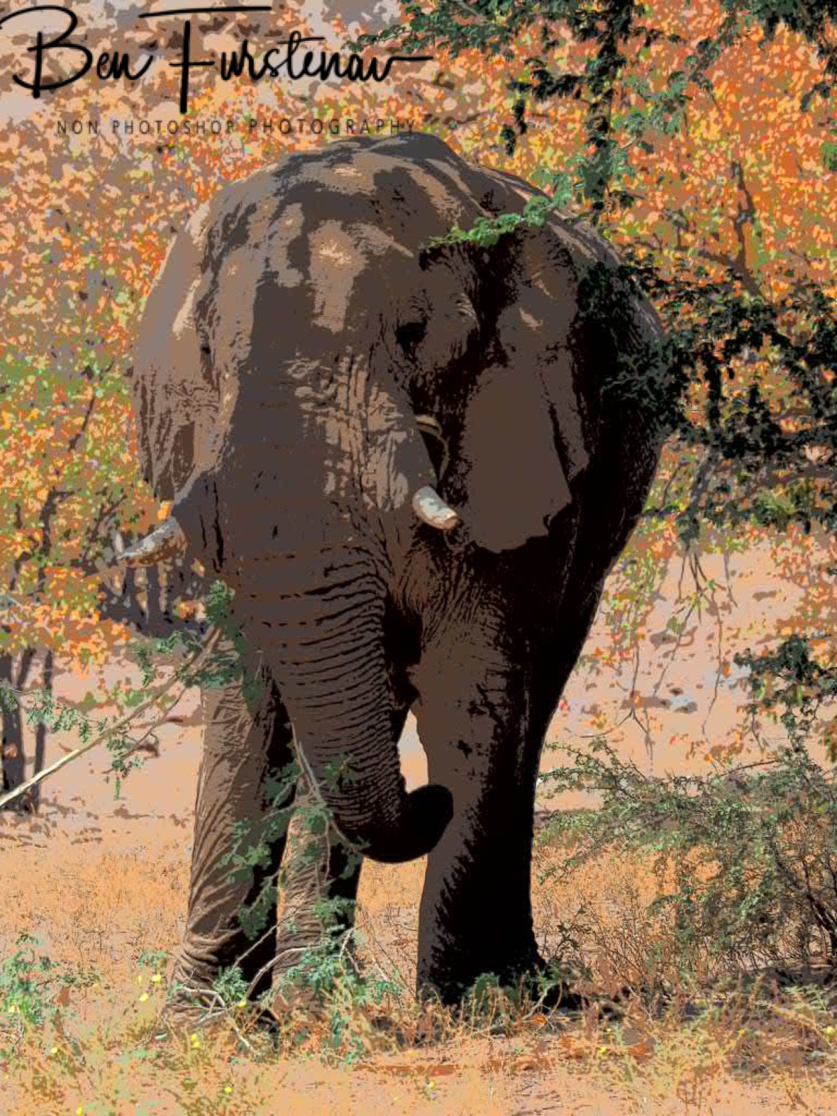 Last view on my favourite gentle giants, Damaraland, Namibia