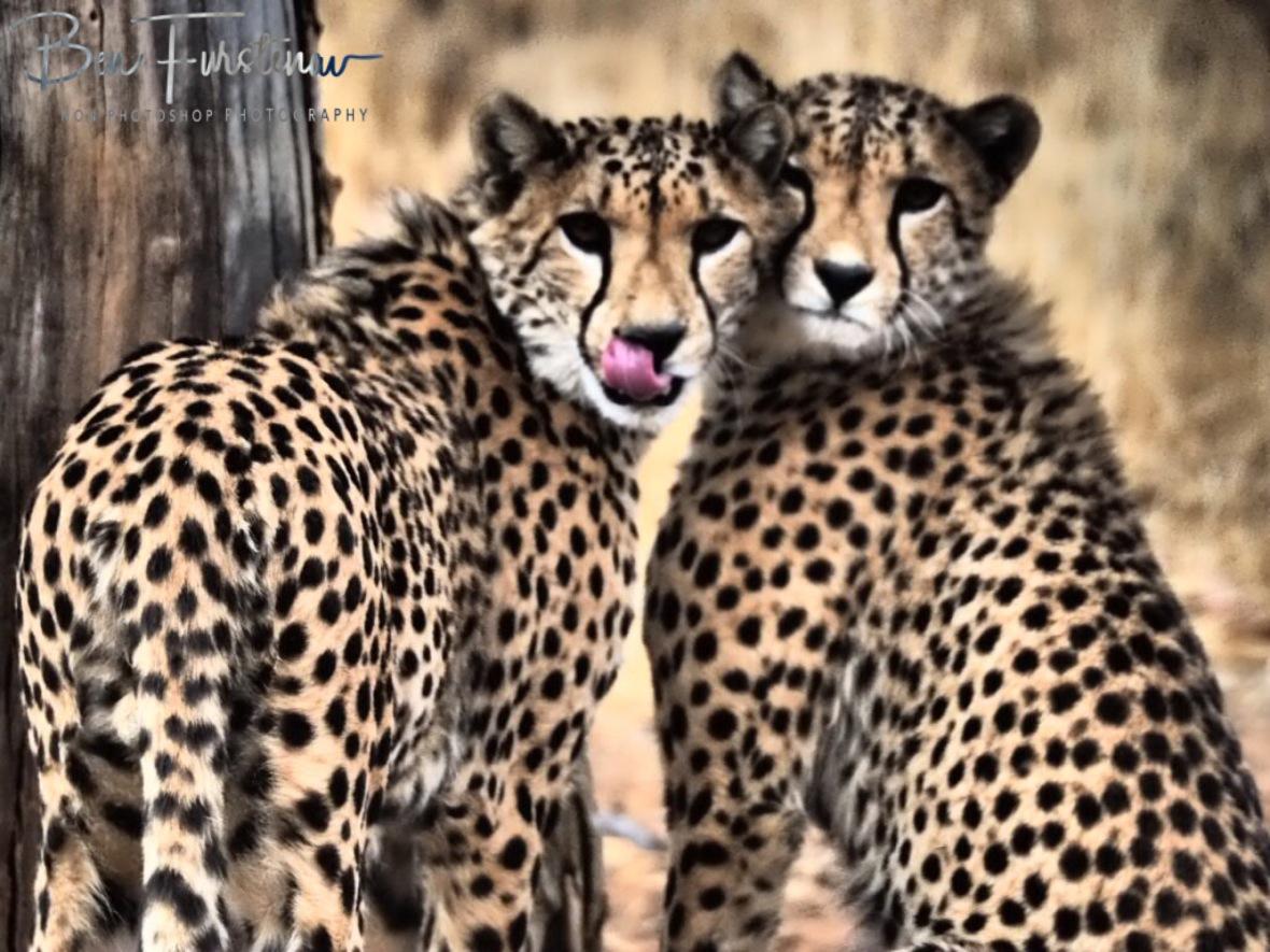 Too cute, Sophienhof, Outjo, Namibia