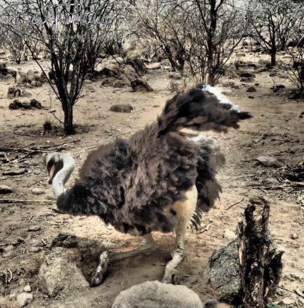 Shake it, shake it!, Oppi Koppi, Kamanjab, Namibia