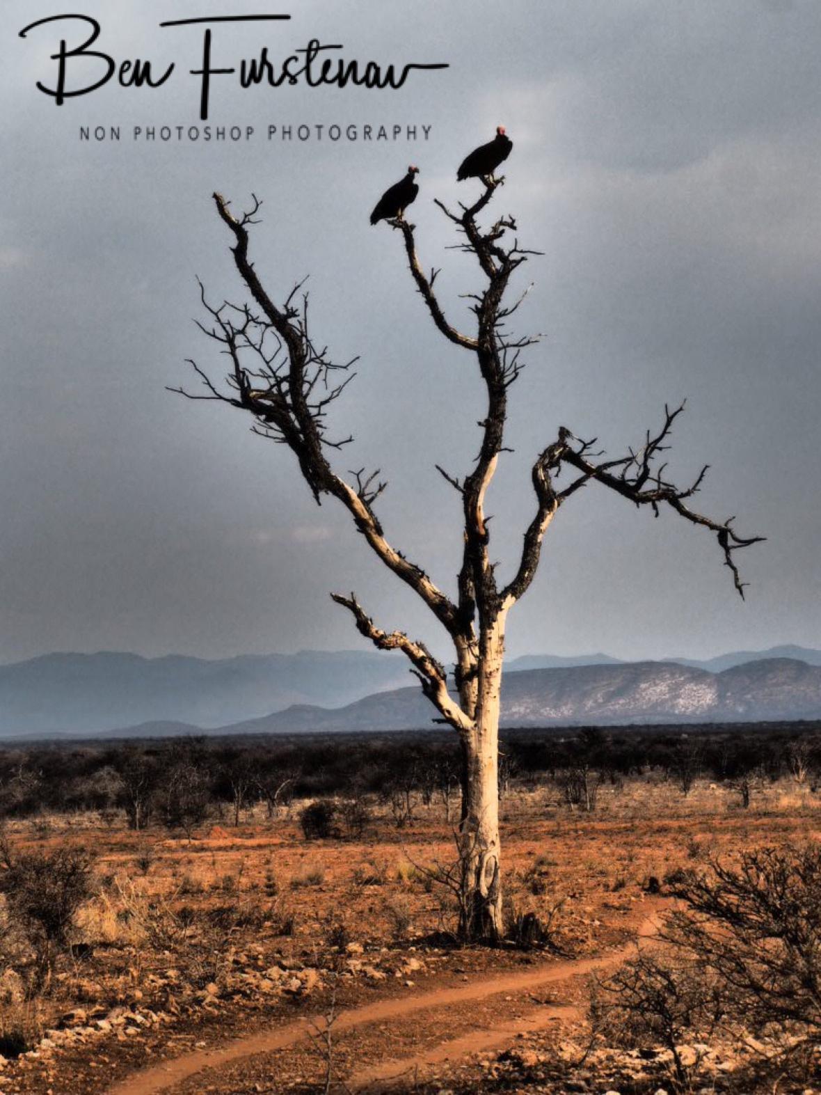 Arid scene, Sophienhof, Outjo, Namibia