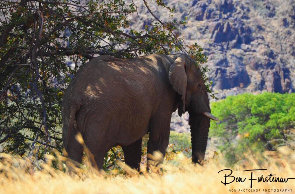Movement behind the bush, Damaraland, Namibia