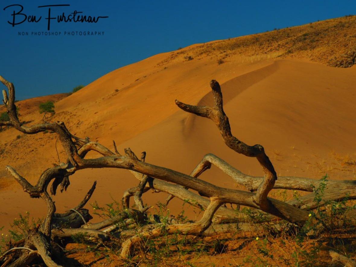 Sand dune formation, Damaraland, Namibia
